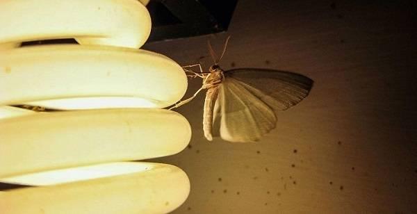 جلوگیری از ورود حشرات