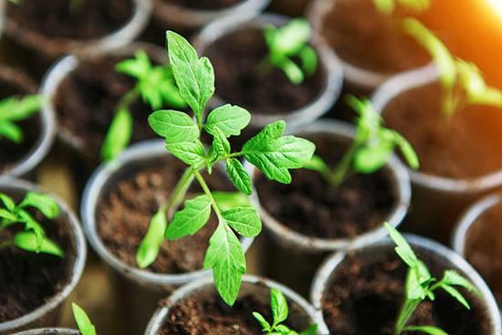 پرورش سبزی خوردن