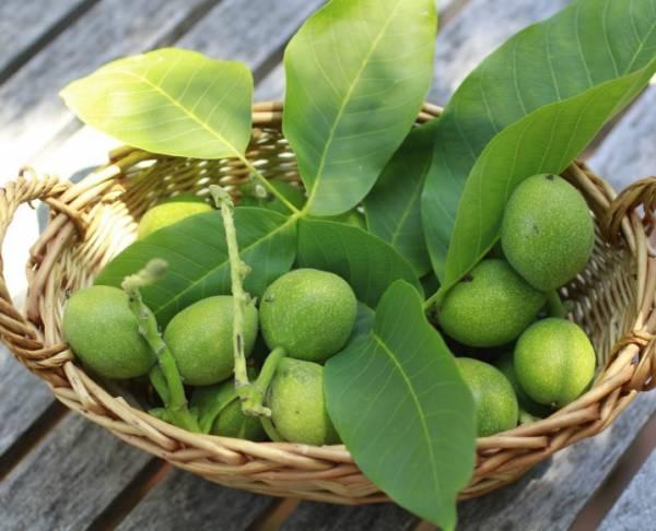 گردوی سبز برای تیروئید