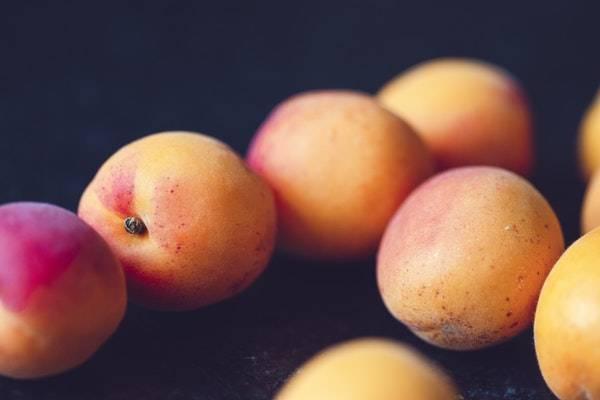 میوه زردآلو