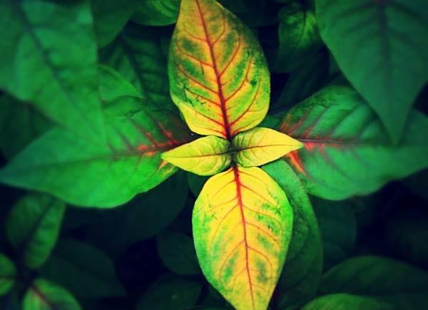 دلیل زردی گیاهان