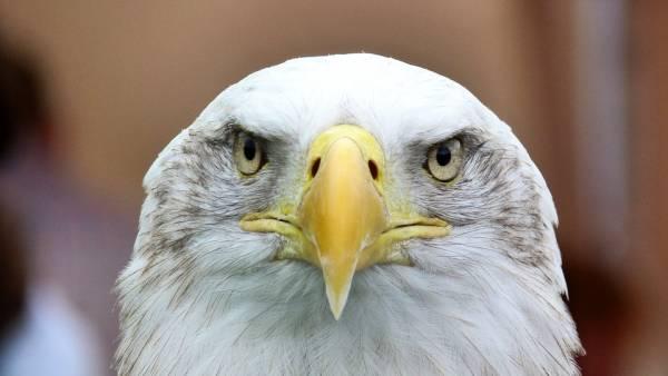 بینایی عقاب