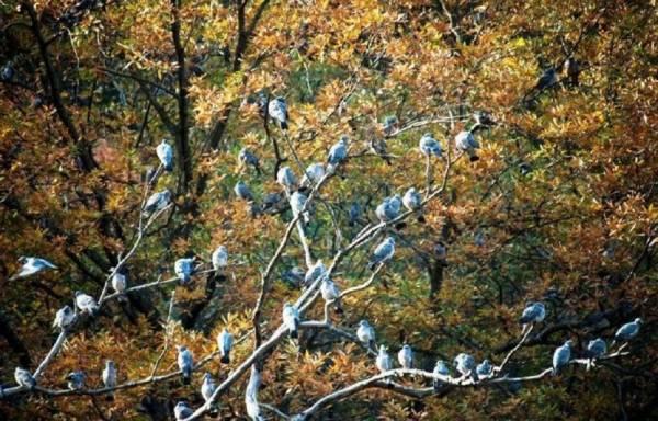 پرندگان جنگل گلستان