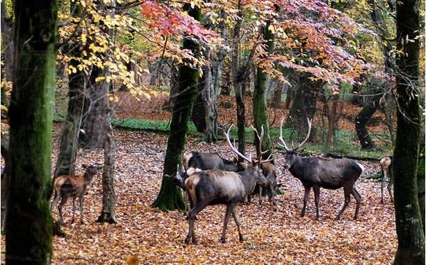 جانوران جنگل گلستان