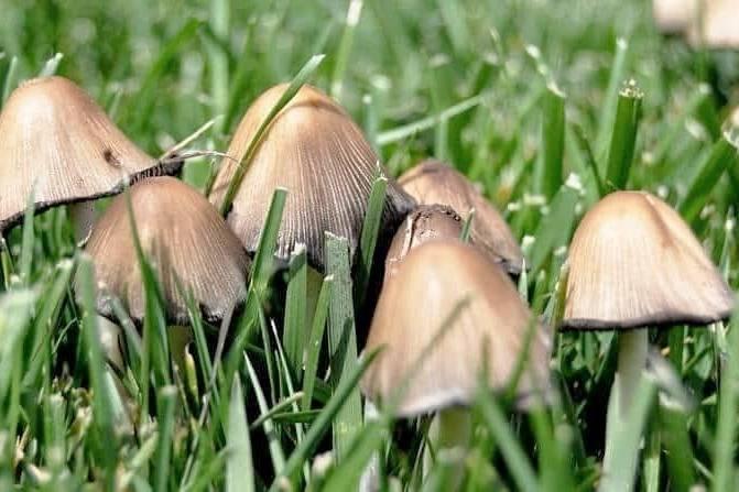 استفاده از دارچین در باغچه