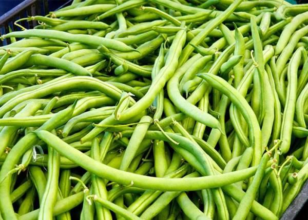 مزایای لوبیا سبز