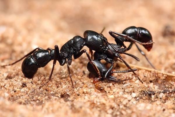 روش دفع کردن مورچه ها