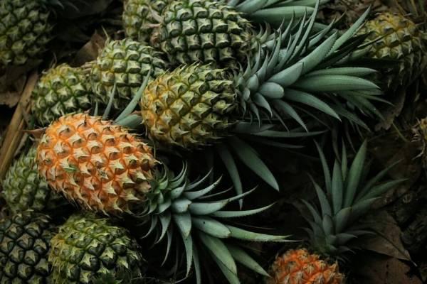 فواید آناناس چیست؟