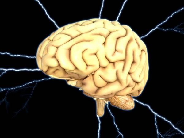 ویتامینی مفید برای مغز