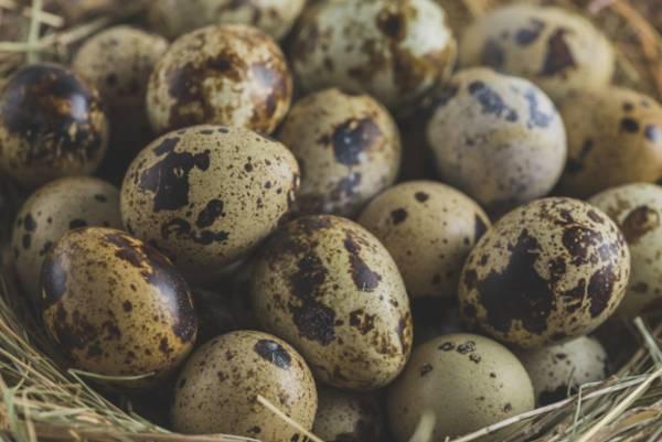 تخم بلدرچین برای انرژی