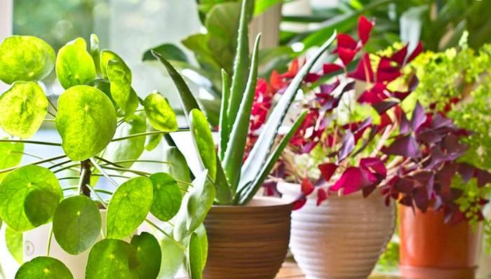 نگهداری گل و گیاه
