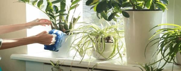 نگهداری گیاه