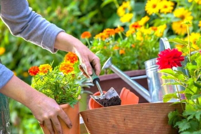 نحوه نگهداری گل و گیاه
