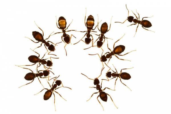 فراری دادن مورچه