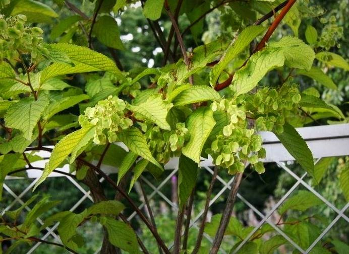 گیاه ضد سرطان