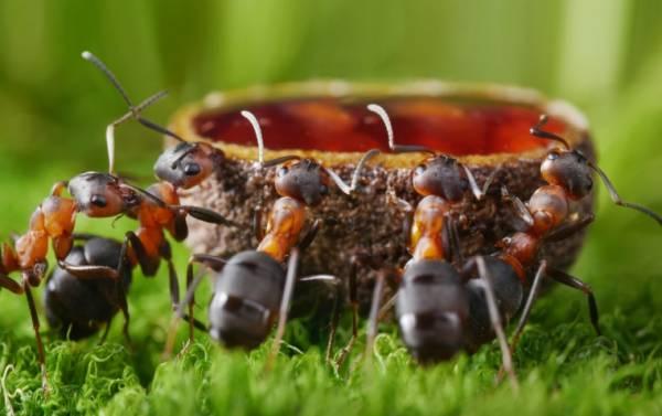 غذای مورچه