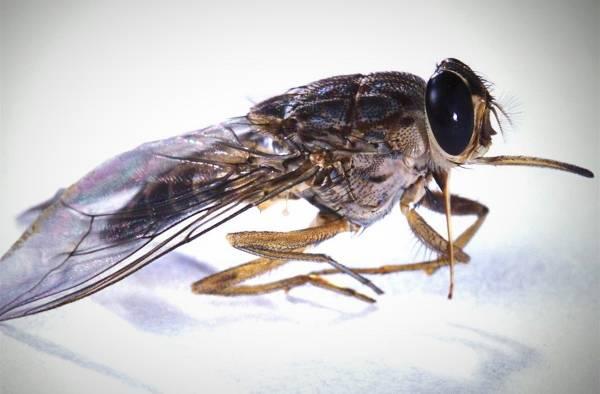 حشرات کشنده