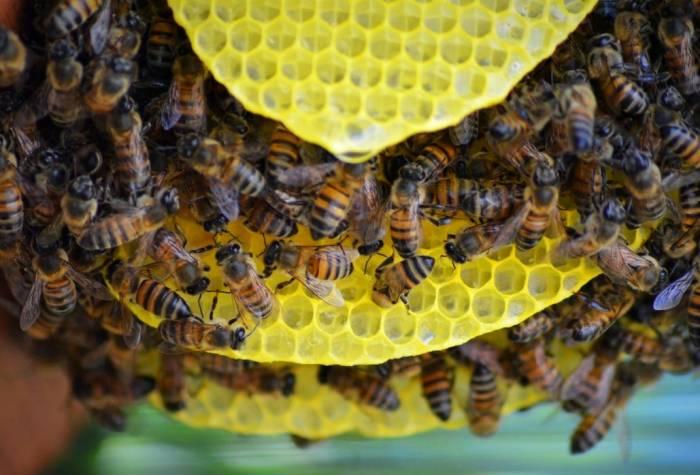 تبریک روز جهانی زنبور