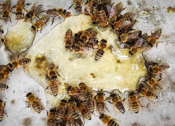 روز زنبور