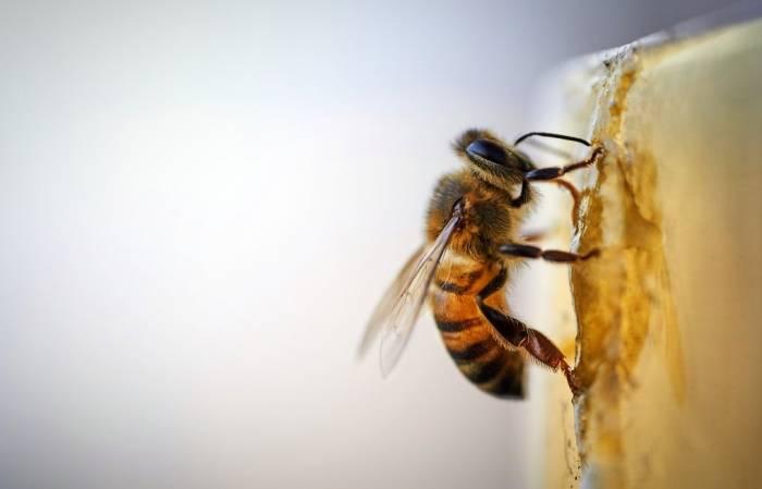 تبریک انگلیسی روز زنبور