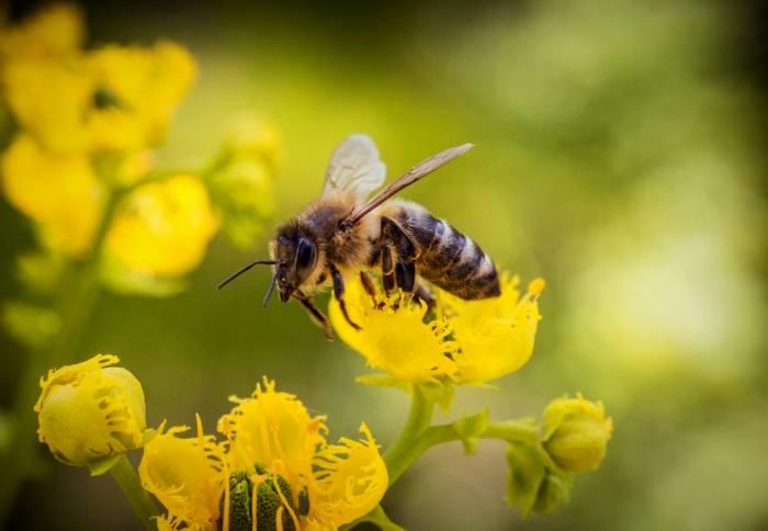 تاریخچه روز زنبور
