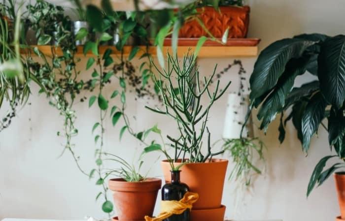 نگهداری گیاهان خانگی