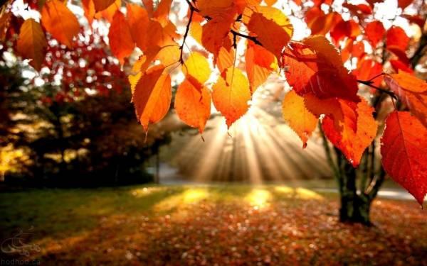 عکس پرتره پاییز