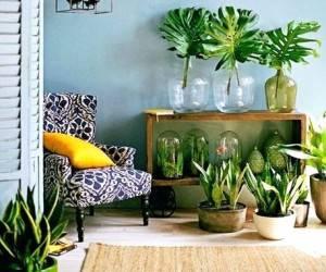 ایده های دکوراسیون گل و گیاه برای خانه های بدون حیاط