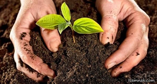کود گیاه با تفاله قهوه