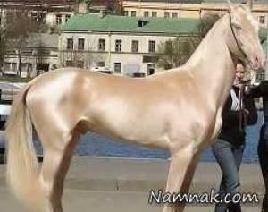 قیمت اسب اخال تکه