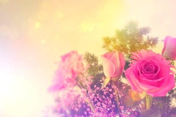 پرورش گل رز خانگی