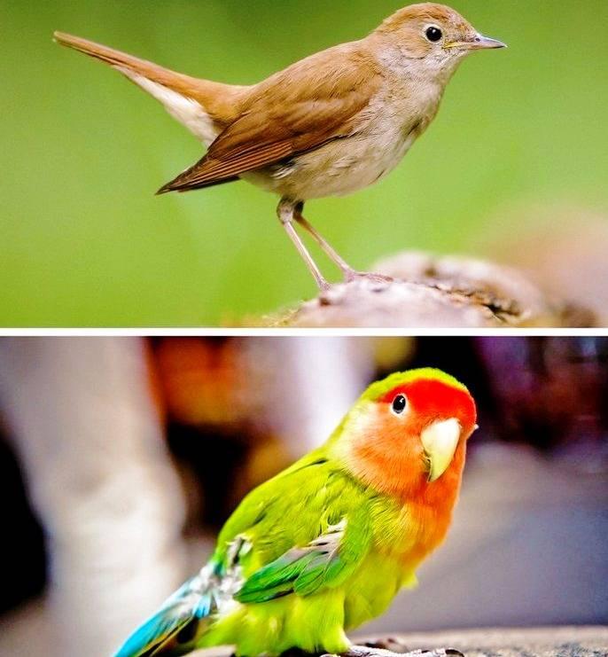 پرند باهوش