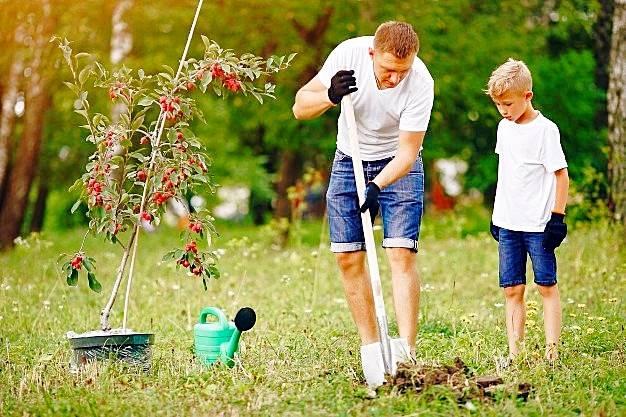 تاثیرات باغبانی