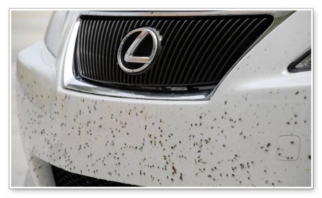 حشرات خودرو