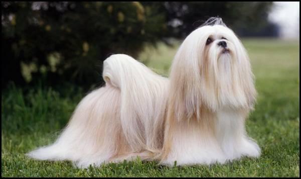 زیباترین مو های در حیوانات