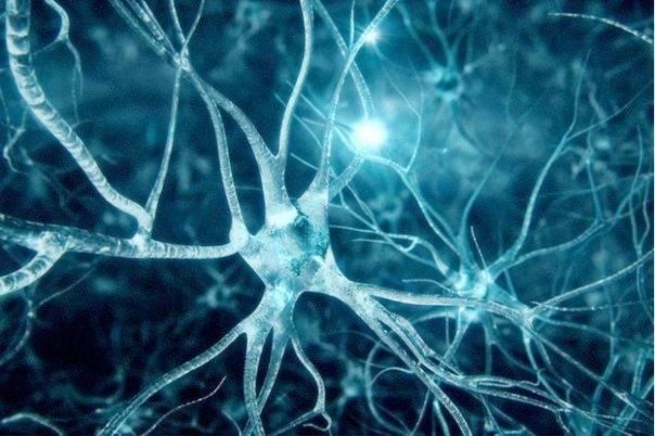 اتصال بین نورون ها