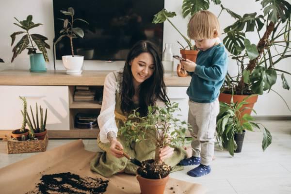 پرورش گیاهان آپارتمانی