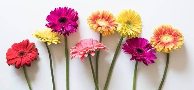 تفاوت رنگ گلها