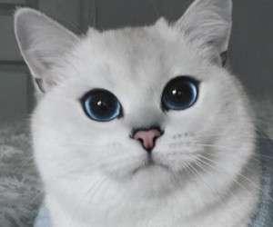 عمر گربه ها چند سال است ؟ روش افزایش عمر مفید گربه ها