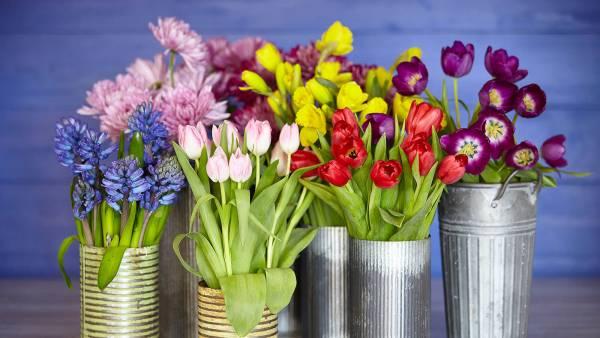 خرید و نگهداری گل لاله