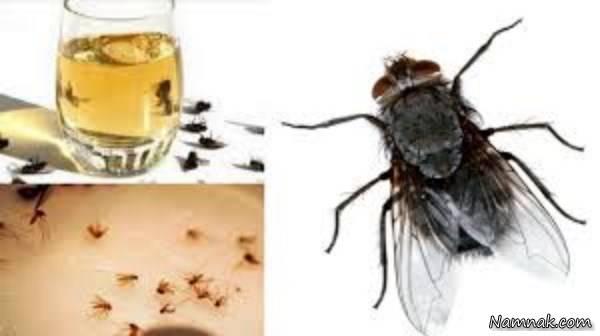 محلول دفع حشرات