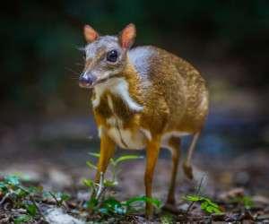 زیباترین حیوانات دنیا تصاویر