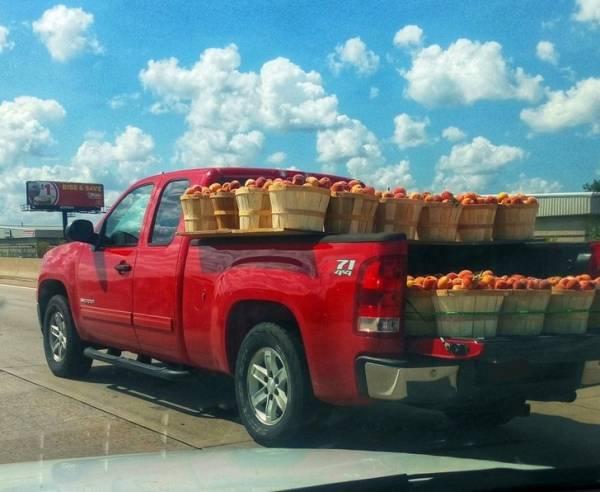 ترتیب میوه ها در اتومبیل