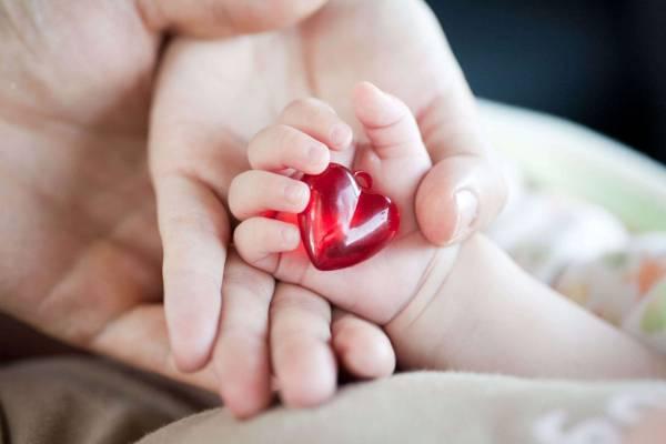 تشکیل قلب جنین