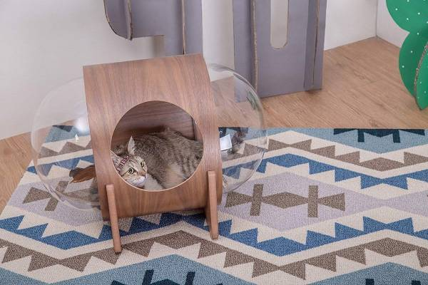 خانه گربه ها