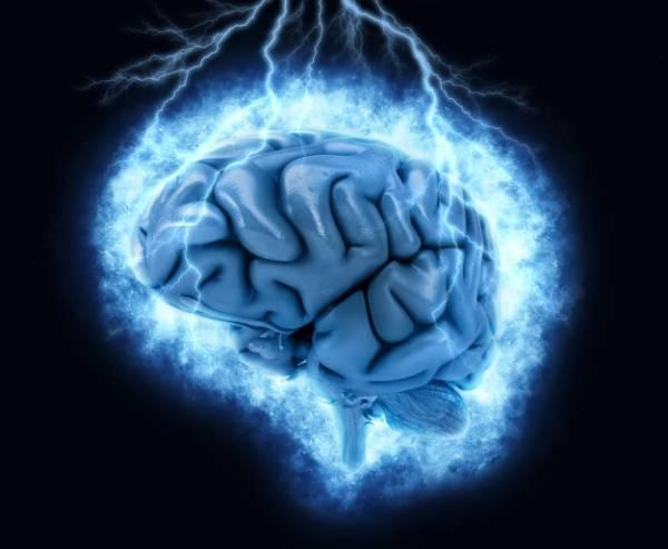 سیستم مغز انسان