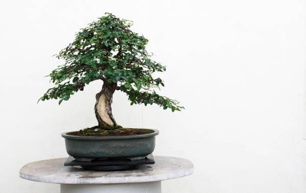 کاشت درخت بن سای