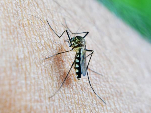 عامل بیماری مالاریا