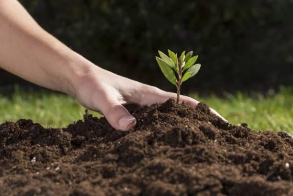 تغذیه خاک