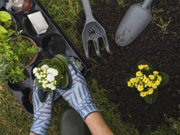 تغذیه خاک گلدان و باغچه